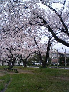 そろそろ桜も散るころ