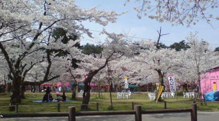 桜藩さくらんど村松公園