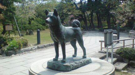 白山神社のタマ公