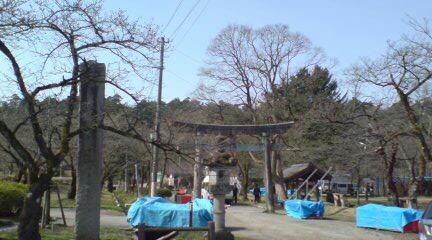 村松公園は桜まつりの準備です。