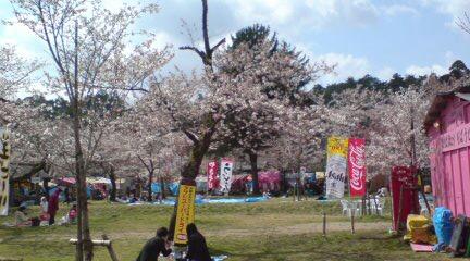 つうことで村松公園の桜