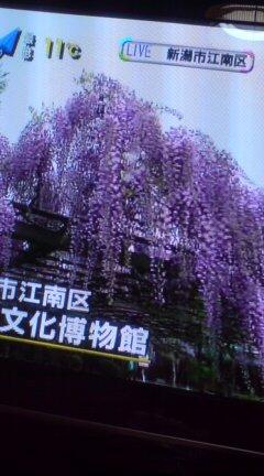 藤の花行こうかな北方文博物館