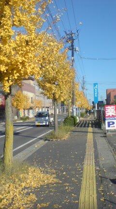 銀杏並木散歩