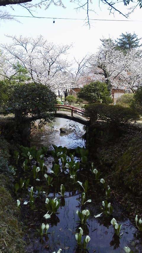村松公園です。