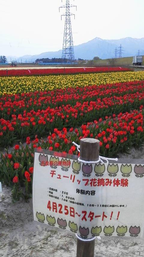 五泉の花シリーズ